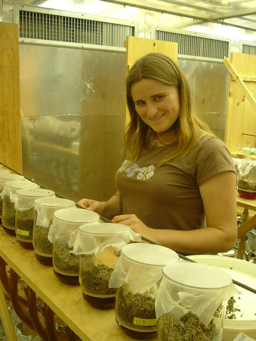 Monica processing samples in the growth chamber